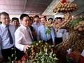Phó Thủ tướng Vương Đình Huệ dự hội nghị xúc tiến Nhãn lồng Hưng Yên