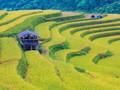 Ruộng bậc thang Hoàng Su Phì, kiệt tác của các dân tộc ít người