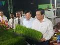 Khai mạc Festival lúa gạo và công bố thương hiệu lúa gạo Việt Nam