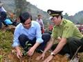 安沛省举行植树节