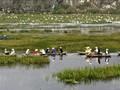 Entdecken die Naturschönheit des 9. Schutzgebietes Van Long- Ramsar in Vietnam