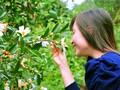 '써' (So) 꽃 축제, 꽝닌 (Quang Ninh) 성의 특색 있는 관광 행사