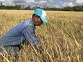 응웬 쑤언 푹 (Nguyễn Xuân Phúc) 총리, 쌀 수매 보관 관련 회의 주재