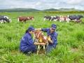 비나밀크 (Vinamilk), 베트남 우유산업 면모 일신 중