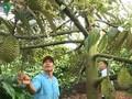 О Као Ван Нгуене, который помог односельчанам cтать состоятельными