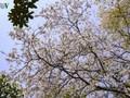 2019 반꽃 축제