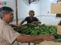 Крестьяне получают высокий доход от шелководства