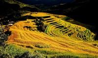 Provinsi Yen Bai - Destinasi yang atraktif di perjalanan  daerah Tay Bac