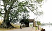 ベトナムの村、成りたちと存在