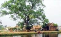ベトナムの伝統的な村の独特な構築