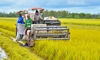 メコンデルタ地域での農業生産へのハイテク応用