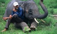 ムノン族の象に関する儀式