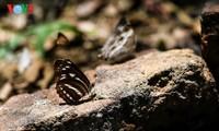 クックフゥオン国立公園の蝶
