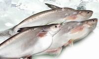 Mengenakan tarif anti dumping terhadap ikan Patin Vietnam adalah tidak adil