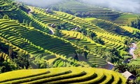 2015 Culture and Tourism Week of Hoang Su Phi terraced rice fields opens