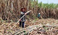 TPP – a platform for Vietnamese businesses to grow