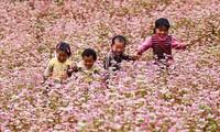 Ha Giang promotes its buckwheat flower fest in Hanoi