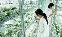 Ho Chi Minh City's High-Tech Agriculture achievements