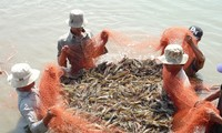 Adaptation of shrimp farming to climate change
