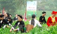 Tan Cuong tea-growing area in Thai Nguyen recognized as a tourist site