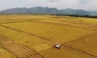 Mekong Delta expands farm land toward large-scale production