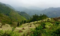 Vietnam targets 42% forest coverage by 2020