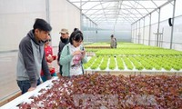 Lam Dong to spend nearly 2 million USD on sustainable agriculture production chains