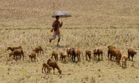 Humid heat waves in Southern Asia likely to kill even healthy people