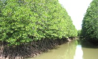 Mangrove co-management model helps restore forest belt along coast line