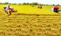 Organic rice production models to affirm Vietnam's export status