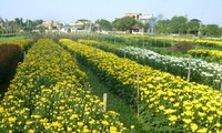 Phu Van village combines horticulture and tourism