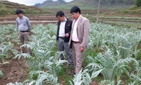 Medicinal herbs improve mountainous people's livelihood