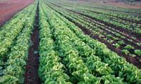 温室効果ガスの削減のため、グリーン農業を発展させる