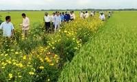 稲田の境界あぜ道に花を植えるモデル開発