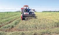 タイビン省、農業経済を発展