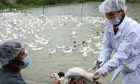 合作防治动物传人疾病