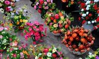 越南语讲座:越南春节花市