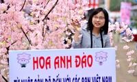 2014年日本樱花节在河内开幕