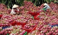 九龙江平原打造水果出口品牌