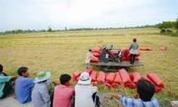 在现阶段建设越南新型农业合作社
