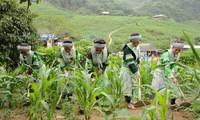 2015年越南政府集中帮扶贫困少数民族地区