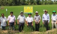 提高稻米生产效益并减少其温室气体排放