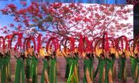 第四届凤凰花节正式开幕