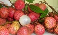 荔枝出口和越南农产品的出口机会