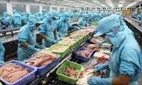 金瓯省水产品出口创汇近55亿美元