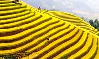 越南河江省黄树皮县梯田旅游文化周特色鲜明