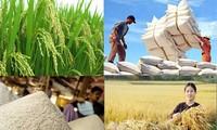 截至11月越南大米出口同比增长4%