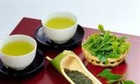 宣光省采用越南良好农业规范(VietGap)认证标准生产茶叶