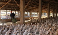 中国发现一例感染H5N1禽流感病例