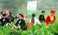 太原省大慈茶节举行